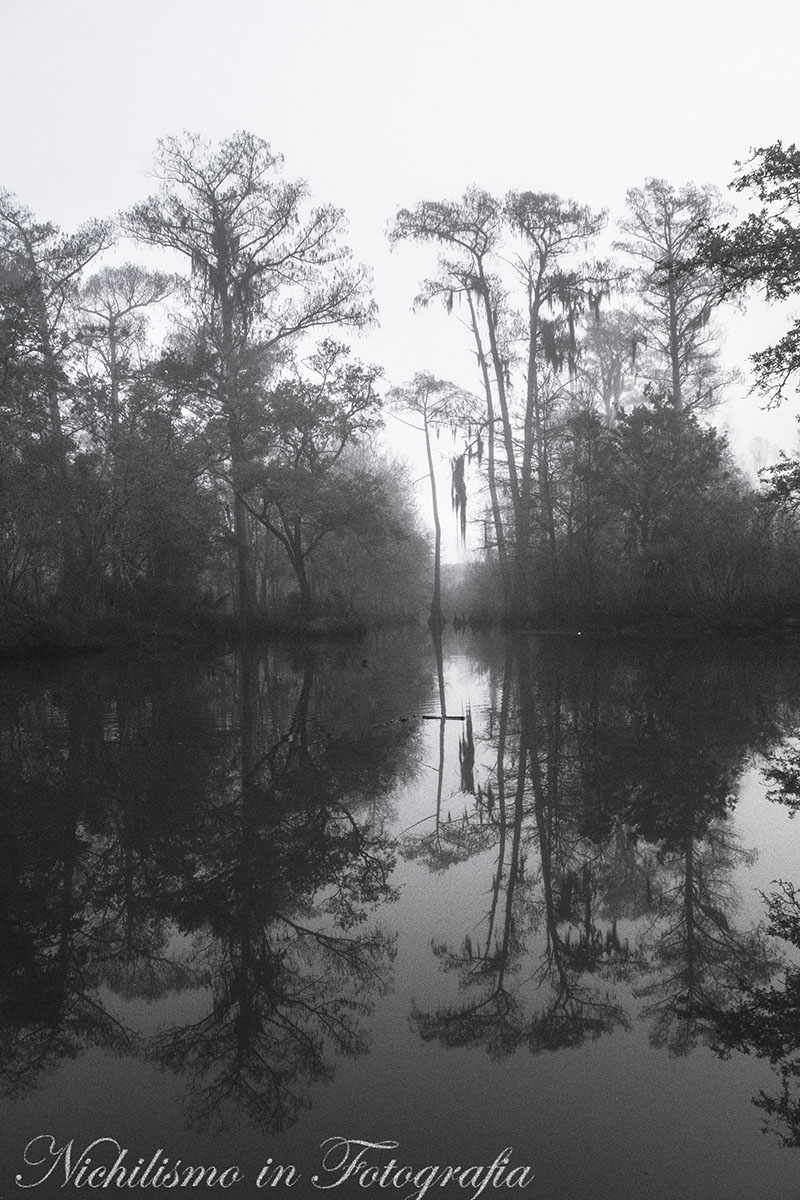 Reflections of a Bayou