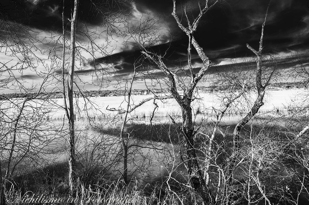 Marsh in Connecticut, Infrared